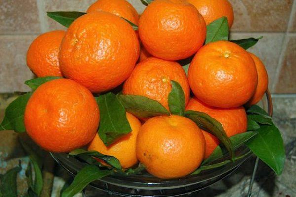 1495520721 poleznye i vkusnye mandariny2