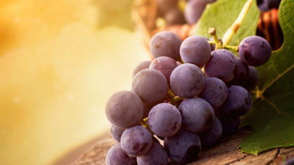 Grozd krasnogo vinograda