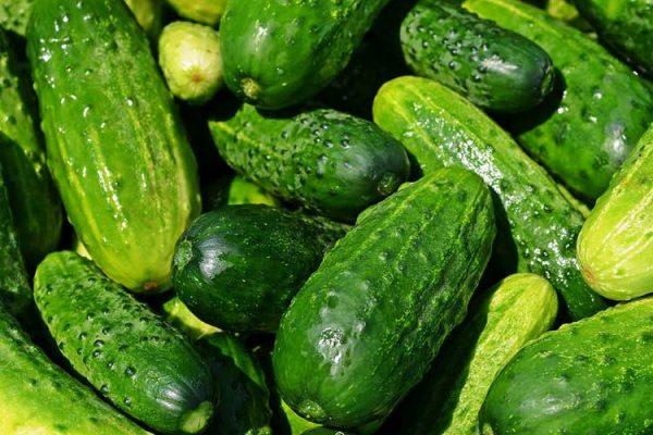 cucumbers growing big