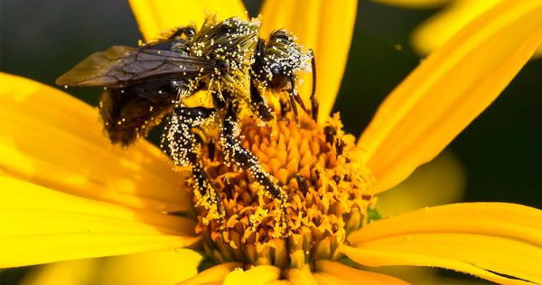 1495525507 pollen 2