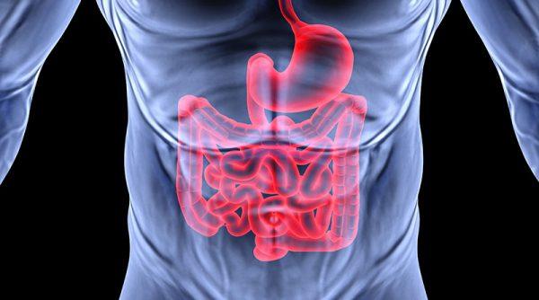 digestion 800