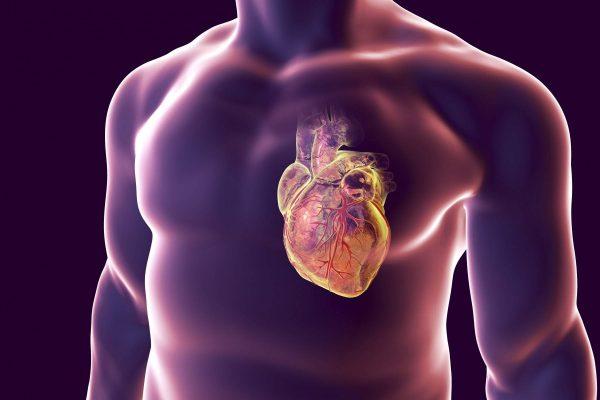 Как проверить здоровье вашего сердце?