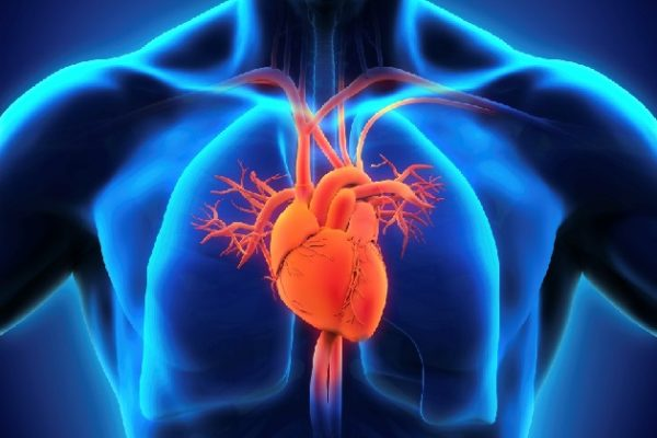 9 удивительных мифов о болезнях сердца и сосудов