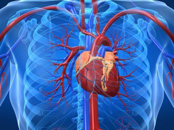 Что происходит с сердцем при стенокардии Принцметала?