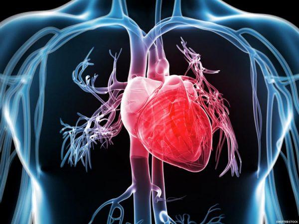 3 простых способа, как улучшить работу сердца и сосудов