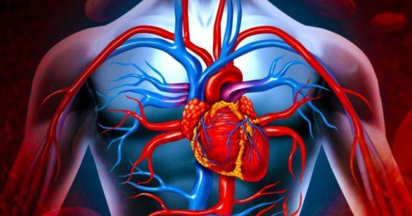 Узнайте, 5 самых распространенных заблуждений о работе сердца